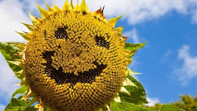 Delad lycka är dubbel lycka