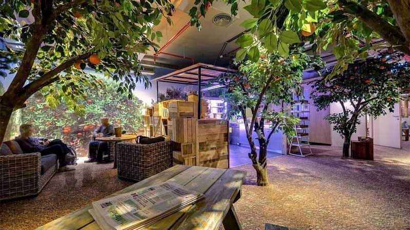 Googles kontor/apelsinlund i Tel Aviv. Kontoret på bilden utnämns ofta som ett av världens bästa kontor.