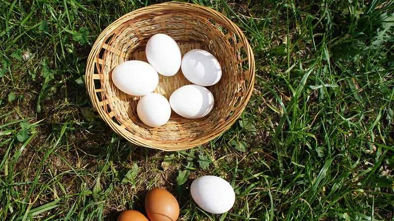 Lägger du alla ägg i samma korg eller sprider du riskerna med ditt pensionssparande?