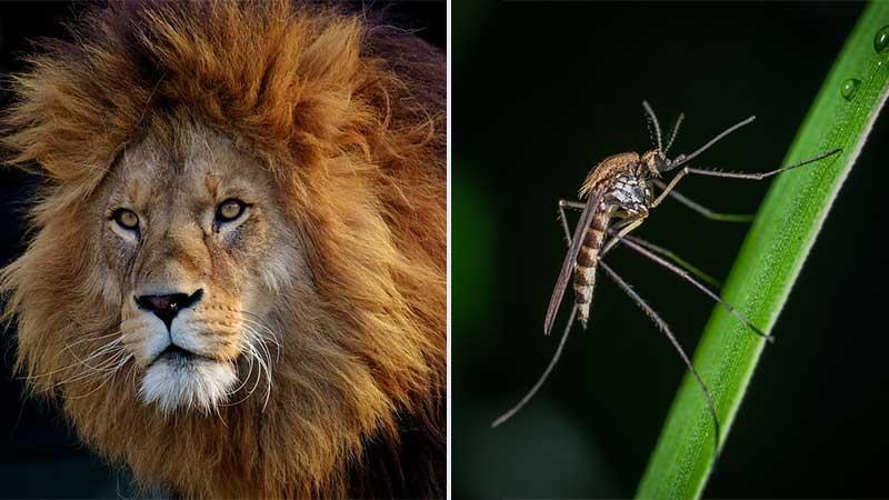 Är risken av karaktären mygga eller lejon?
