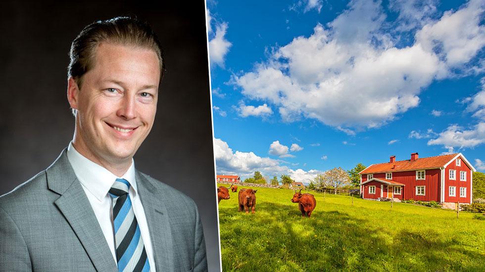 Highland cattle på bete i Småland.