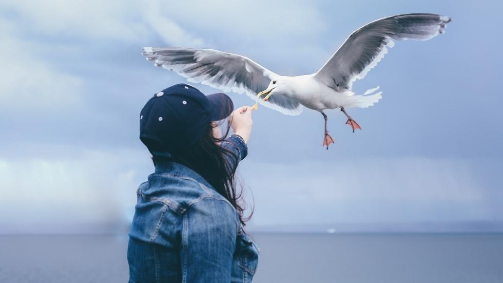 Foto: Lucas Sankey |Unsplash – en person matar fåglar