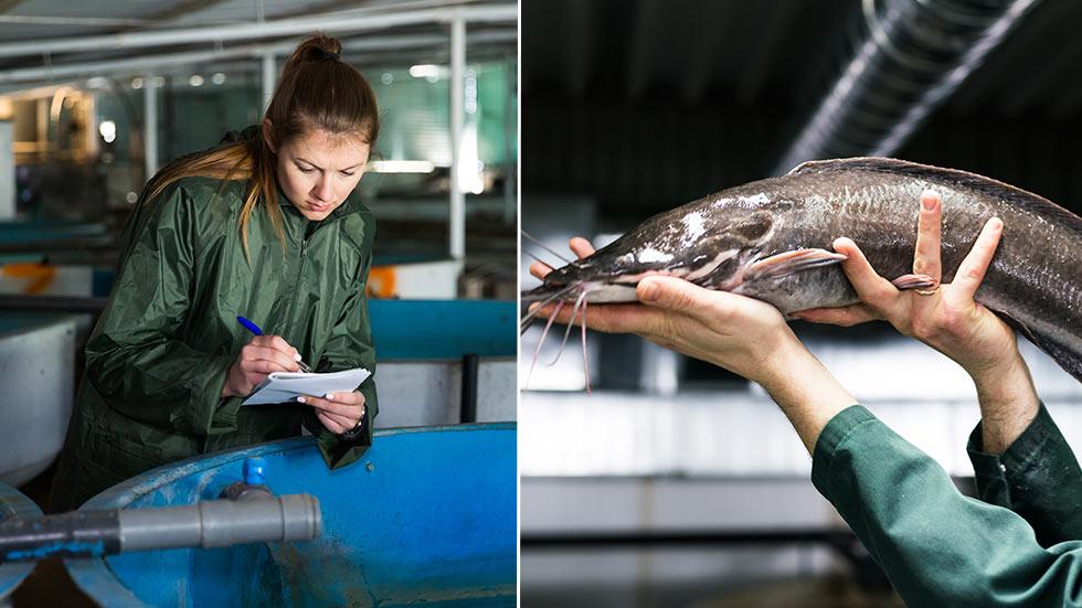 Tips hur du startar eget vattenbruk med ex fisk, räkor, musslor, kräftor, tång eller algodling